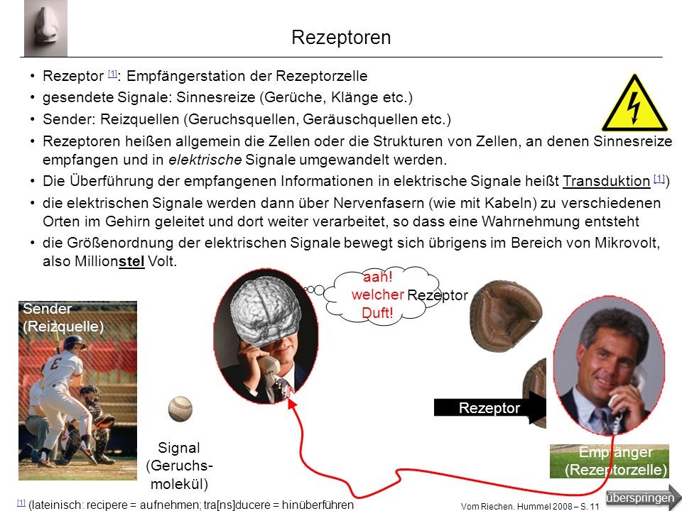 Rezeptoren Rezeptor [1]: Empfängerstation der Rezeptorzelle